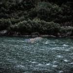 Norseman zwemstart